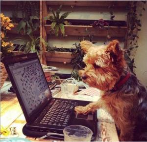 blogfoto-schrijversacademie-oktober-2016